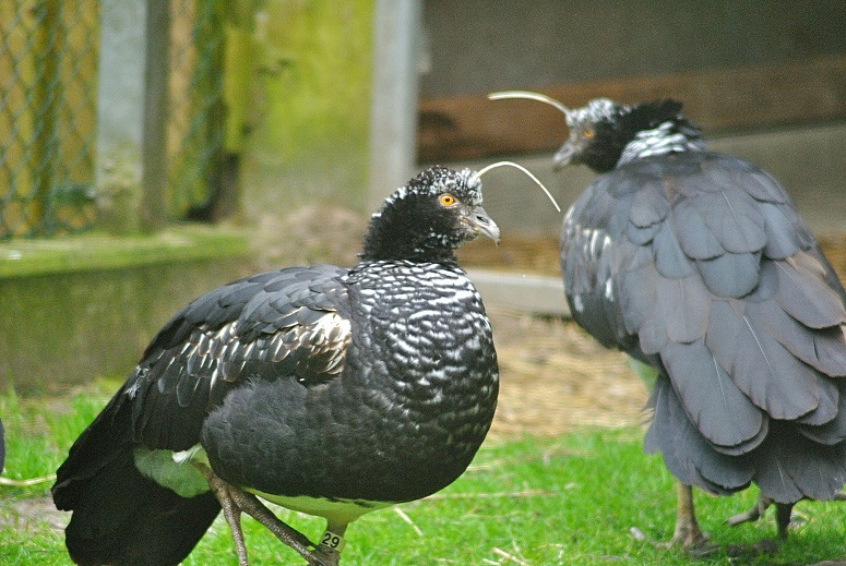 bartvögel haltung bücher