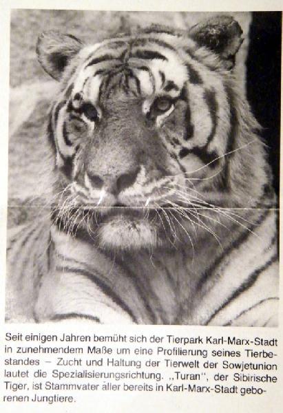 passt tiger erde zu ziege erde