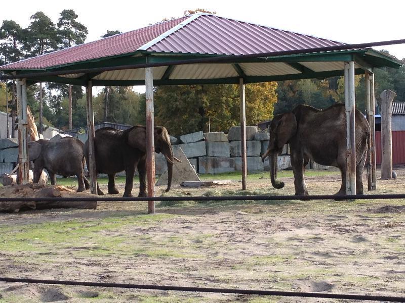 ruhesitz am zoo preise